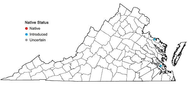 Locations ofMelilotus indicus (L.) All. in Virginia