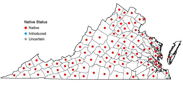 Locations ofMenispermum canadense L. in Virginia