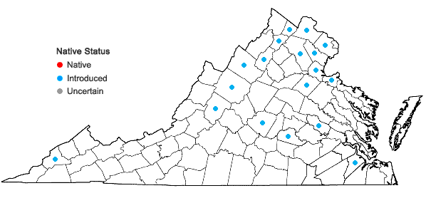 Locations ofMentha ×gracilis Sole in Virginia