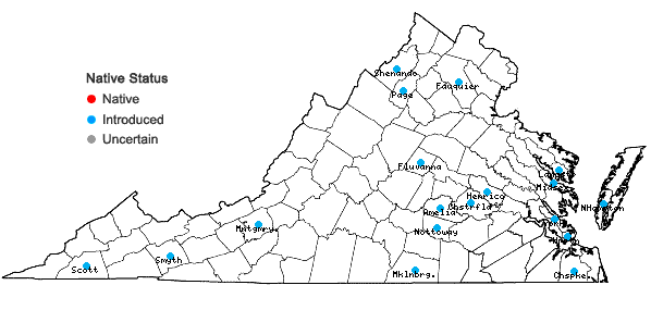 Locations ofMentha ×rotundifolia (L.) Huds. in Virginia