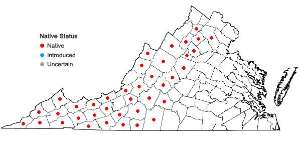 Locations ofMicranthes micranthidifolia (Haw.) Small in Virginia