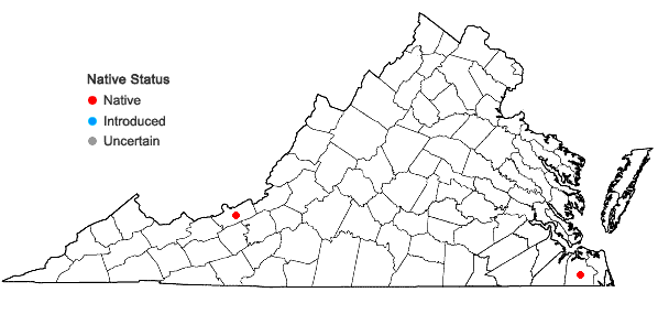 Locations ofMicrolejeunea bullata (Taylor) Steph. in Virginia