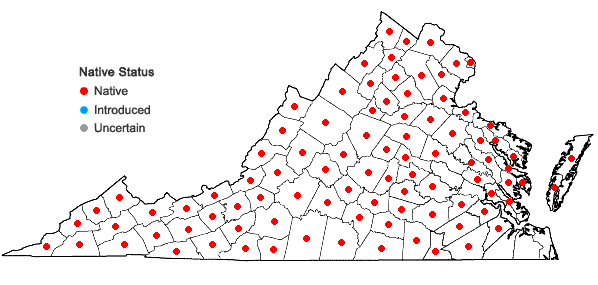 Locations ofMimulus ringens L. var. ringens in Virginia