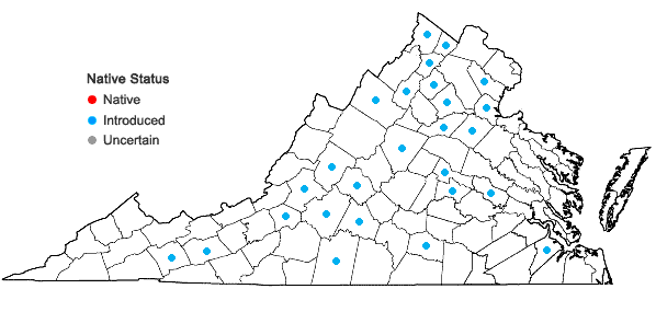 Locations ofMirabilis nyctaginea (Michx.) MacM. in Virginia