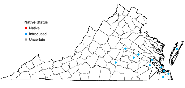 Locations ofModiola caroliniana (L.) G. Don in Virginia