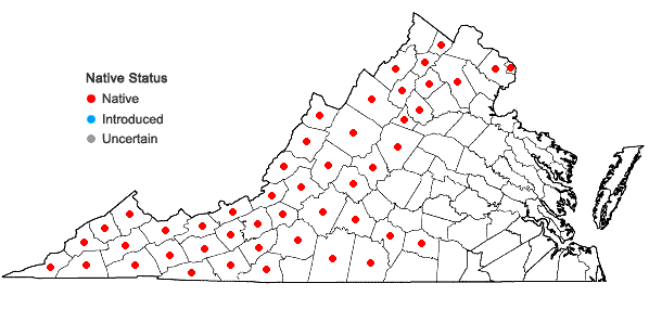Locations ofMonarda clinopodia L. in Virginia
