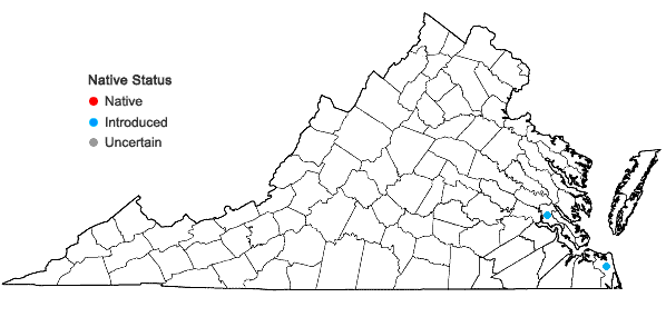 Locations ofMontia fontana L. in Virginia