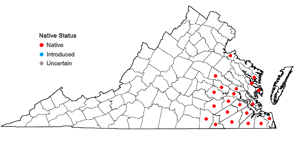 Locations ofMorella caroliniensis (P. Miller) Small in Virginia