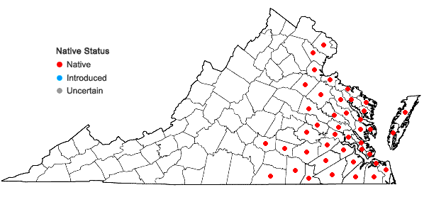 Locations ofMorella cerifera (L.) Small in Virginia