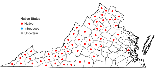 Locations ofMuhlenbergia tenuiflora (Willd.) B.S.P. in Virginia