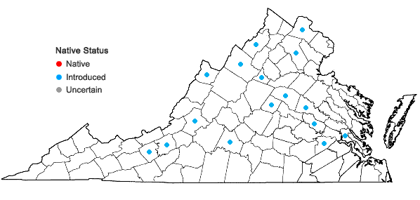 Locations ofMuscari botryoides (L.) P. Mill. in Virginia