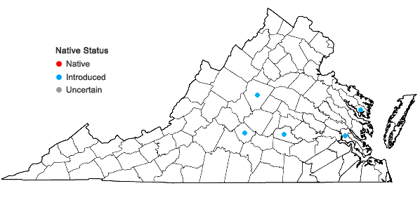 Locations ofMuscari comosum (L.) P. Mill. in Virginia