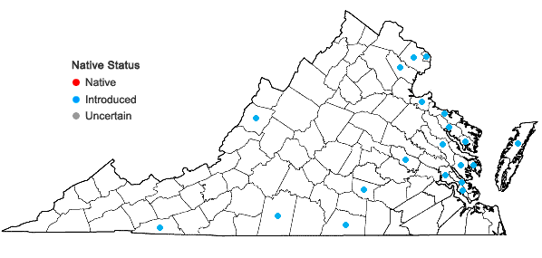 Locations ofMyosotis stricta Link ex Roemer & J.A.Schultes in Virginia