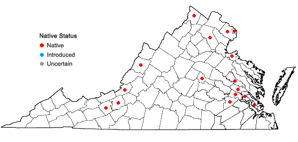 Locations ofNajas flexilis (Willd.) Rostk. & Schmidt in Virginia
