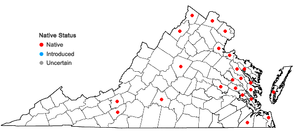 Locations ofNajas guadalupensis (Spreng.) Magnus var. guadalupensis in Virginia