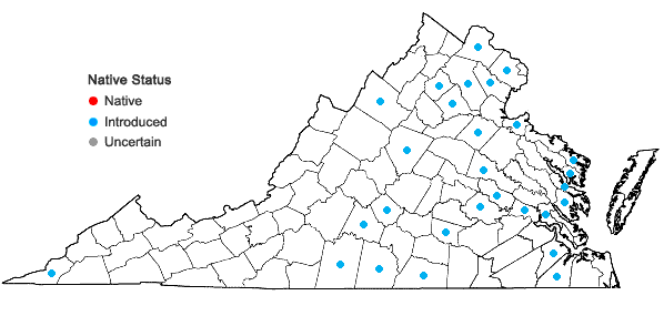 Locations ofNarcissus poeticus L. in Virginia