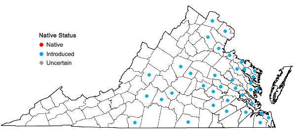 Locations ofNarcissus pseudonarcissus L. in Virginia