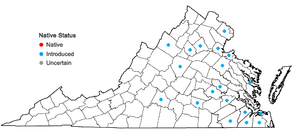Locations ofNarcissus tazetta L. in Virginia