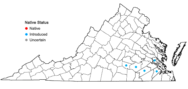 Locations ofNuttallanthus texanus (Scheele) D.A. Sutton in Virginia