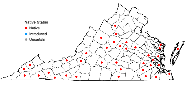 Locations ofOdontoschisma denudatum (Nees) Dumort. in Virginia