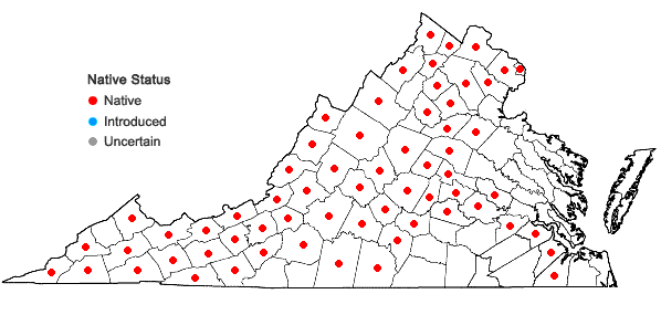 Locations ofOenothera gaura W.L. Wagner & Hoch in Virginia