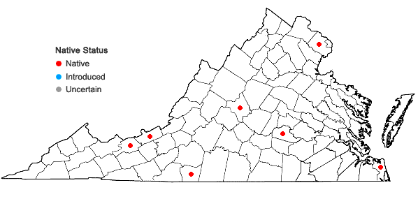 Locations ofOenothera pilosella Raf. ssp. pilosella in Virginia