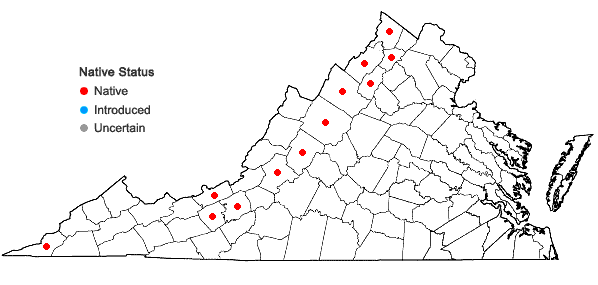 Locations ofOphioglossum engelmannii Prantl in Virginia