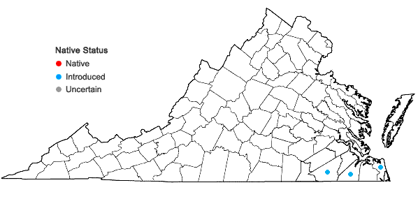 Locations ofOphioglossum petiolatum Hook. in Virginia