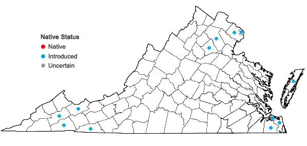 Locations ofOrobanche minor J.E. Smith in Virginia
