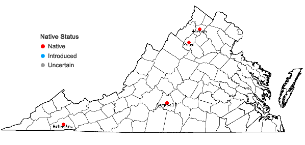 Locations ofOrobanche riparia L.T. Collins in Virginia