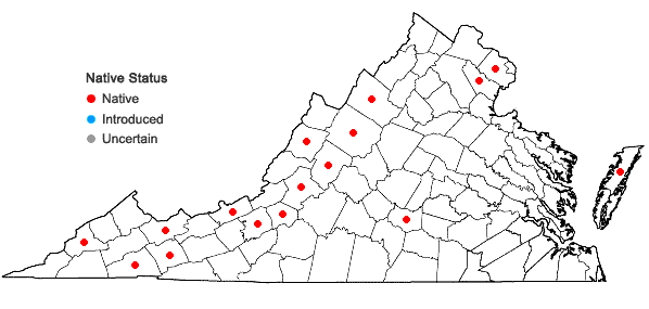 Locations ofOrthotrichum strangulatum P. Beauv. in Virginia