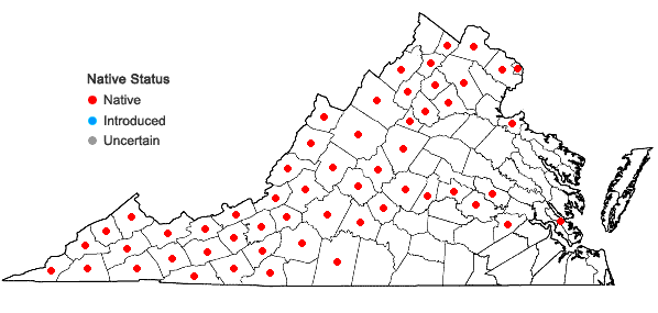 Locations ofOsmorhiza claytonii (Michx.) C.B. Clarke in Virginia