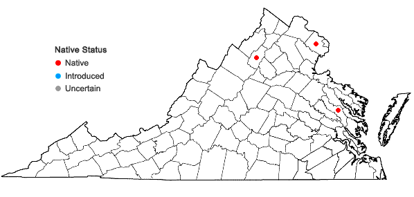 Locations ofOsmundastrum cinnamomeum (L.) C. Presl var. glandulosum (Waters) McAvoy in Virginia