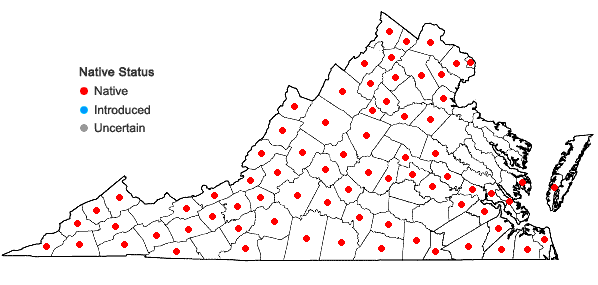 Locations ofOstrya virginiana (P.Mill.) K.Koch in Virginia