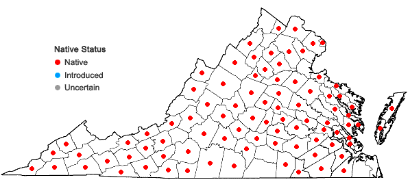 Locations ofOxypolis rigidior (L.) Raf. in Virginia