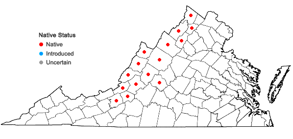 Locations ofPackera antennariifolia (Britton) W.A. Weber & A. Love in Virginia