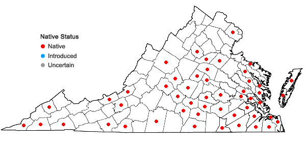 Locations ofPallavicinia lyellii (Hook.) Gray in Virginia