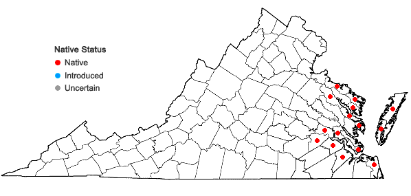 Locations ofPanicum amarum Ell. var. amarum in Virginia
