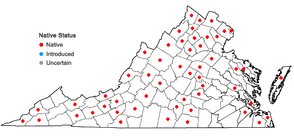 Locations ofPanicum capillare L. ssp. capillare in Virginia