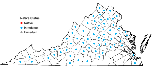 Locations ofPapaver dubium L. in Virginia