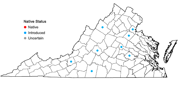 Locations ofPapaver rhoeas L. in Virginia