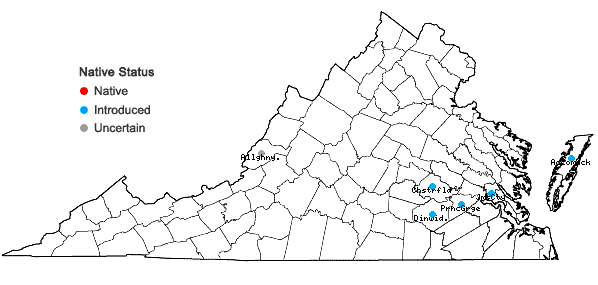 Locations ofParthenocissus vitacea (Knerr) A. Hitchcock in Virginia