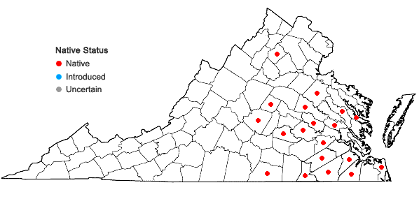 Locations ofPenstemon australis Small in Virginia
