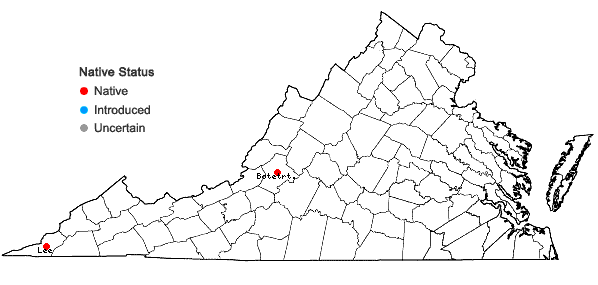 Locations ofPenstemon calycosus Small in Virginia