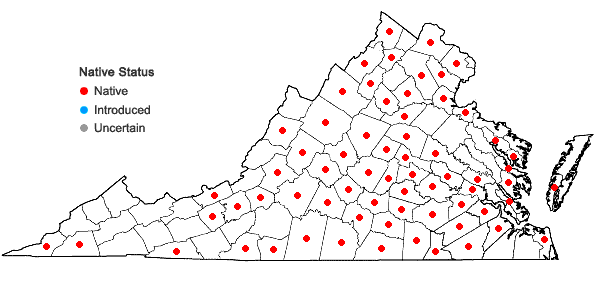 Locations ofPenstemon laevigatus Aiton in Virginia