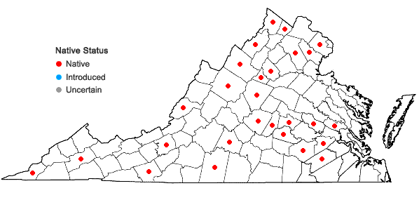 Locations ofPenstemon pallidus Small in Virginia