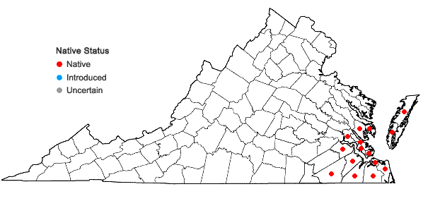 Locations ofPersea palustris (Raf.) Sarg. in Virginia