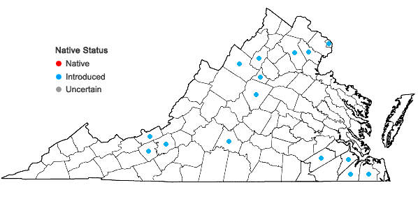 Locations ofPersicaria orientalis (L.) Spach in Virginia