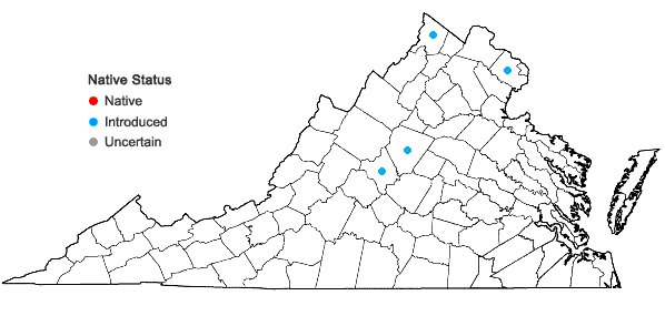 Locations ofPhellodendron amurense Ruprecht in Virginia