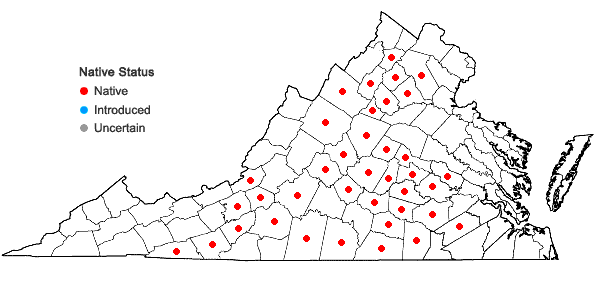 Locations ofPhemeranthus teretifolius (Pursh) Raf. in Virginia